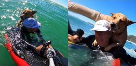 Surfista salva cachorro que estava se afogando em alto-mar; veja o vídeo