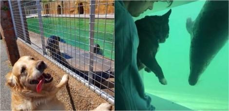 Abrigo de focas é fechado devido à pandemia e funcionários levam seus cachorros para visitá-las