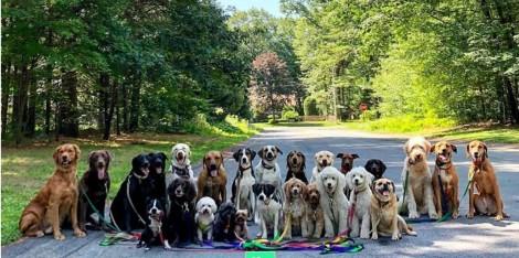 Passeador de cães de Nova York tira fotos adoráveis de seus 'clientes' e internet fica apaixonada