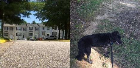 Em Virgínia (EUA), cadela impede que criança de 10 anos seja sequestrada e ataca o suspeito que foge