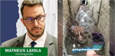 Delegado Matheus Laiola resgata cães vítimas de maus-tratos em São José dos Pinhais, Paraná