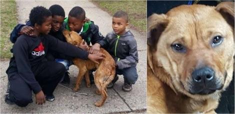 Quatro crianças salvam vida de cão faminto e ajudam ele a ser adotado nos EUA