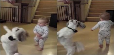 Em vídeo, bebê tenta copiar truques de cãozinho da família para receber petiscos também