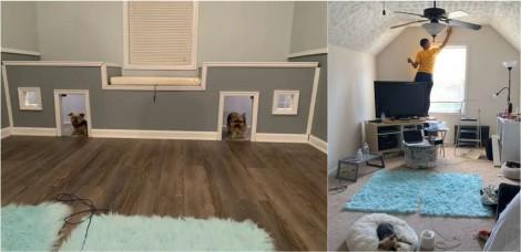 Dona transforma quarto de hóspedes de sua casa em mini-mansão para suas cachorrinhas