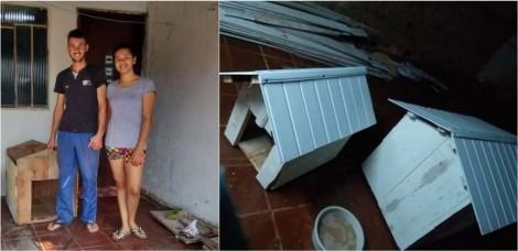 Jovem constrói casinhas para cachorro e as doa em troca de alimento para ajudar famílias carentes