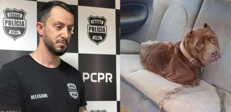 Pit bull que vivia preso em carro de ferro-velho em péssimas condições é salvo pelo delegado Matheus Laiola; vídeo