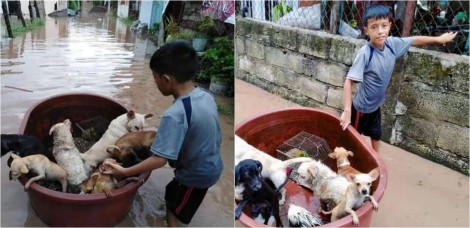 Criança de 10 anos usou balde de plástico de casa para salvar cães de inundação