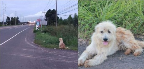 Cão espera 4 anos no mesmo lugar seus donos retornarem para buscá-lo