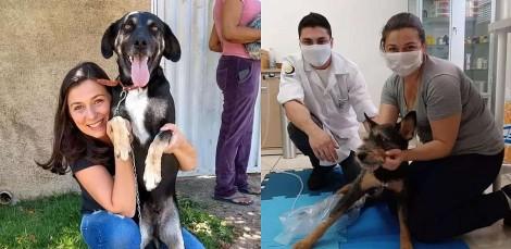 Enfermeira acolhe e cuida de dezenas de animais abandonados e vítimas de maus-tratos em Campo Limpo Paulista, SP