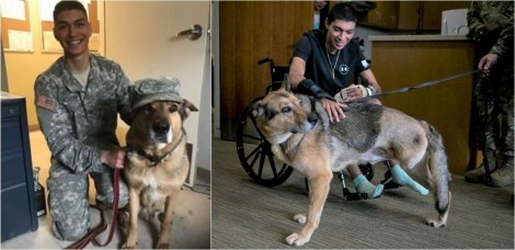 Soldado e seu leal cachorro pastor alemão sobrevivem graças à amizade que os une