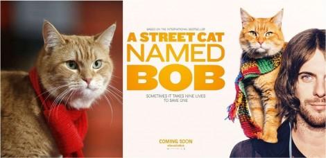 Gato Bob, felino que inspirou livro e filme, falece: 'Ele mudou minha vida', diz dono