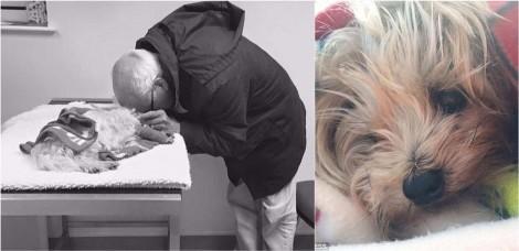 Idoso de 74 anos perde sua cadela e filha diz que seu pai chorava 'como uma criança'