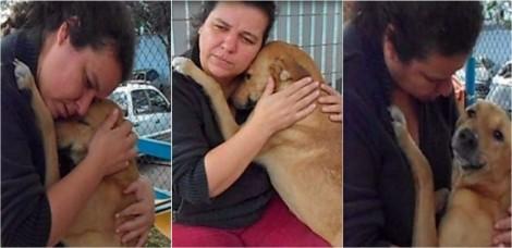 Emocionado com aproximação carinhosa, cachorro recusa comida e abraça voluntária de São Paulo; assista