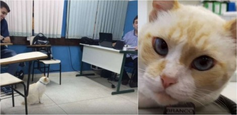 Dona segue seu gato e descobre que ele frequentava faculdade em Santos todo dia quando fugia