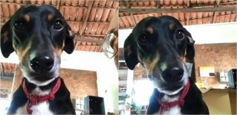 Cadela vira-lata foge e dono explica para ela em vídeo hilário o que poderia ter acontecido