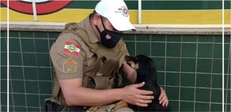 Policiais catarinenses resgatam e adotam cadela que estava abandonada em rodovia movimentada