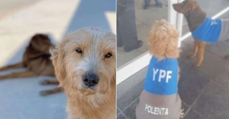 Dono de posto adota e 'contrata' duplinha de cães encontrada em estrada na Argentina
