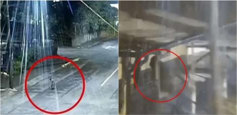 Vídeo: Cachorro de rua ajuda polícia a prender ladrão de mercearia e vira herói