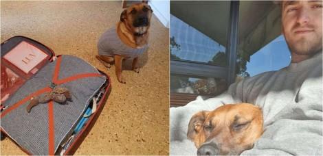 Cadela coloca brinquedo favorito na mala do seu 'babá' parecendo pedir para ir embora com ele