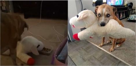 Cachorro divide comida todos os dias com o seu brinquedo favorito: um cordeiro de pelúcia - confira o vídeo
