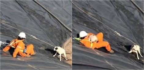 Homens resgatam cadela e filhote que ficaram presos em gigantesco poço d'água; confira o vídeo