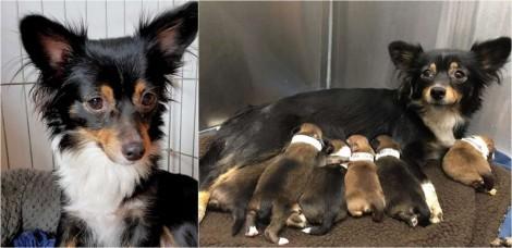 Temendo pela segurança dos seus filhotes recém-nascidos, cadela recusa comida até se certificar que eles não corriam risco