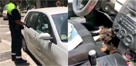 Policial quebra janela para salvar yorkshire que estava passando calor dentro de carro; assista o vídeo