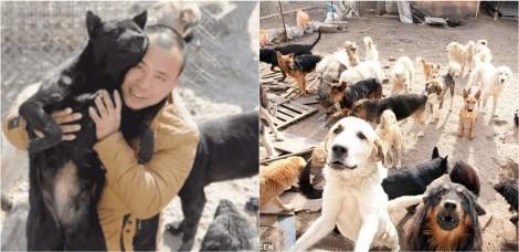 Milionário investiu todo o seu dinheiro para salvar a vida de cães na China