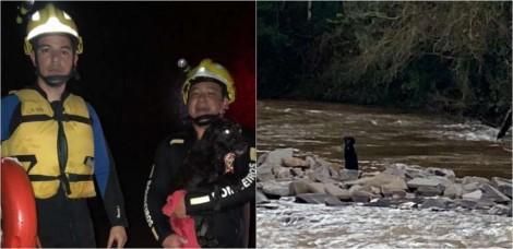 Vídeo: Bombeiros resgatam cachorro que estava ilhado em rio no RS e animal é 'batizado' Noé