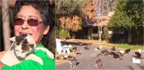 Idosa transforma propriedade de mais de 24.000 m² em santuário para mais de 1000 gatos resgatados