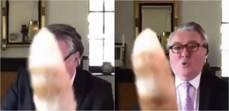"""Durante videoconferência, deputado escocês é interrompido por felino: """"peço desculpas pelo rabo do meu gato"""""""