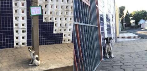 Em Teresina, mulher encontra cadela presa a poste com pedido em plaquinha: 'Por favor, me adote'