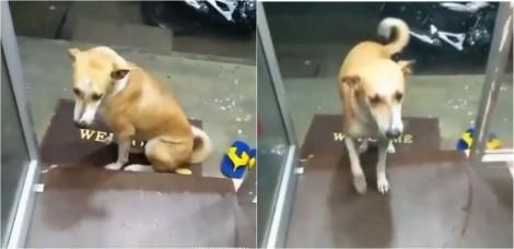 Logista permite que cachorro vira-lata entre em seu estabelecimento para se abrigar de forte chuva - vídeo
