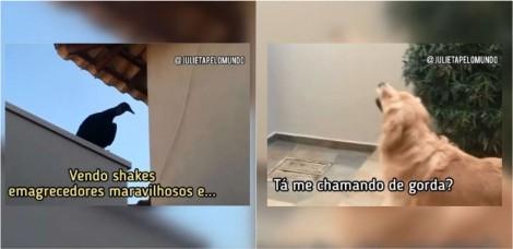 Em vídeo hilário, urubu aparece em residência de cadela golden retriever para 'vender' shake emagrecedor