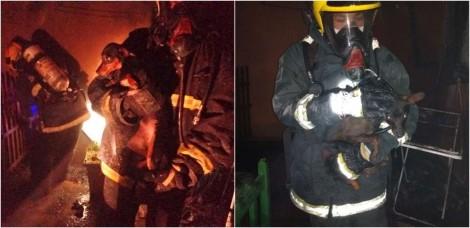 Dois cachorros da raça pinscher presos em canil durante incêndio são salvos em SC