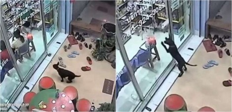 Cachorro perdido dos donos busca socorro em clínica veterinária que ele consultava na Tailândia
