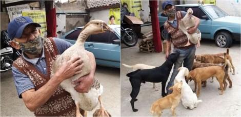 Idoso acolhe gansa e dezenas de animais de rua em sua borracharia de SC; confira