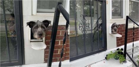 Cachorro descobre que a caixa de correio é a maneira perfeita para cumprimentar os vizinhos