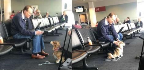 Dona perde sua cadela corgi em aeroporto e se emociona ao encontrá-la consolando idoso triste - vídeo