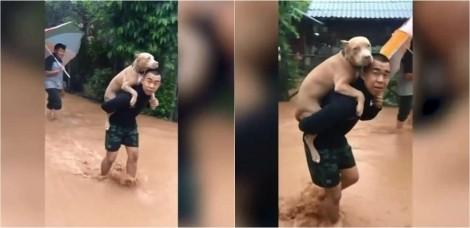 Vídeo: Homem carrega cão pit bull nas costas após ter casa destruída por enchente na Tailândia