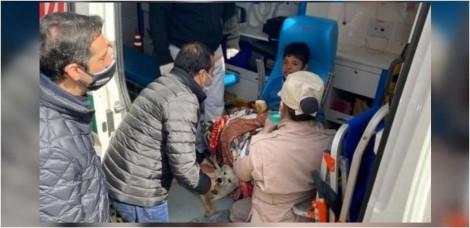 Garoto de 9 anos se perde em mata por 19 horas e tem companhia dos seus cães até chegada de socorro na Argentina