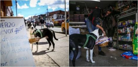 Cãozinho faz compras para o dono, que é idoso, permanecer de quarentena em casa