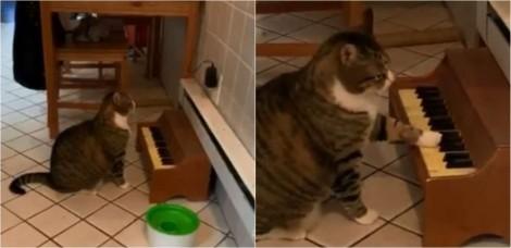 Para avisar a dona, gatinha toca piano toda vez que está com fome e vídeo viraliza