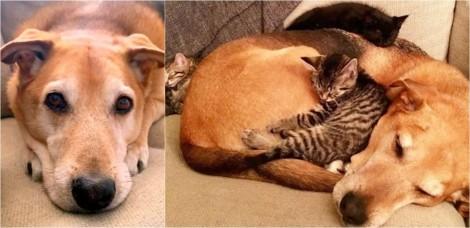 Cãozinho amoroso decide 'adotar' gatinhos resgatados da rua por sua dona; confira