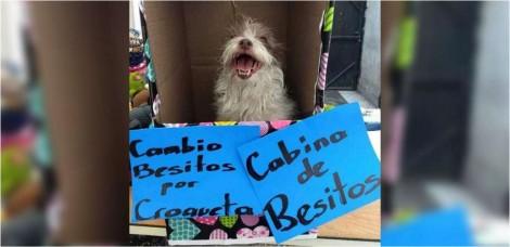 Cachorrinha cuida de Barraca do Beijo, onde troca carinho por biscoitos e promove sua adoção