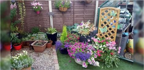 Encontre o cachorro: Você consegue achar Eddie escondido entre as flores do jardim de seu dono?