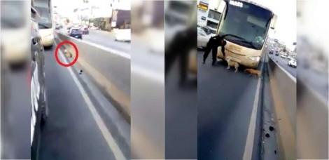 Cães que estavam abraçados com medo em rodovia movimentada, são salvos por policiais no México