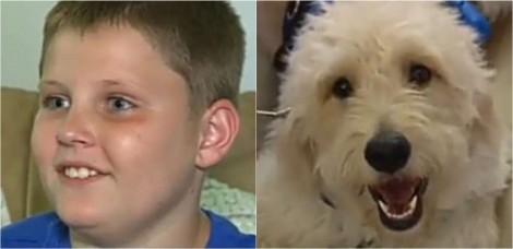 Criança diabética ganha cão goldendoodle treinado para alertá-la sobre alterações de saúde