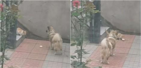 Dona filma seu cachorro entregando pãozinho para gato faminto que entrou no seu pátio na China