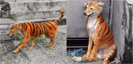 Cão de rua é tingido para ficar com aparência de tigre e causa indignação nas redes sociais